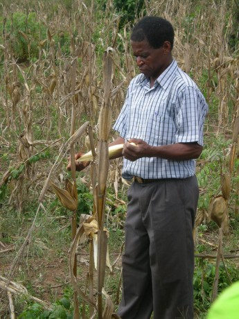 A farmer inspects his crops. Photo credit: Sait Mboob